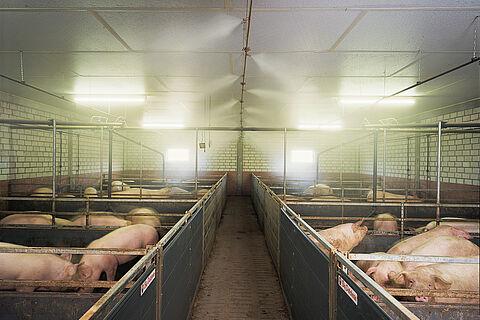 Klimatkontroll för grisar